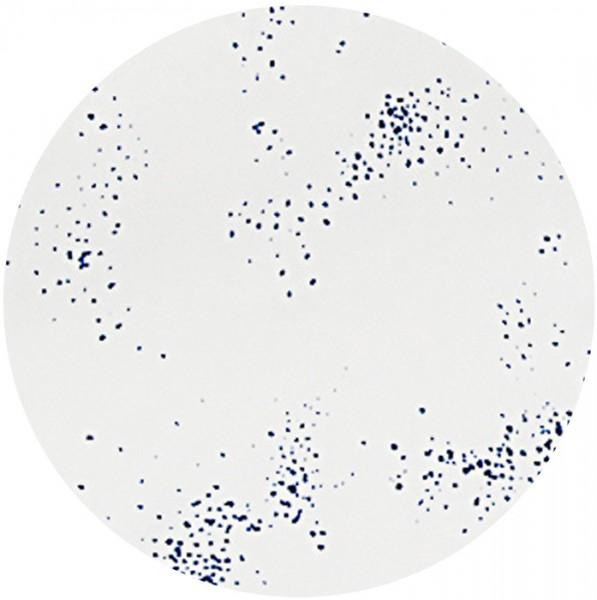 Mulltuch Cosmos 120 x 120 cm von les reves d´ANAIS